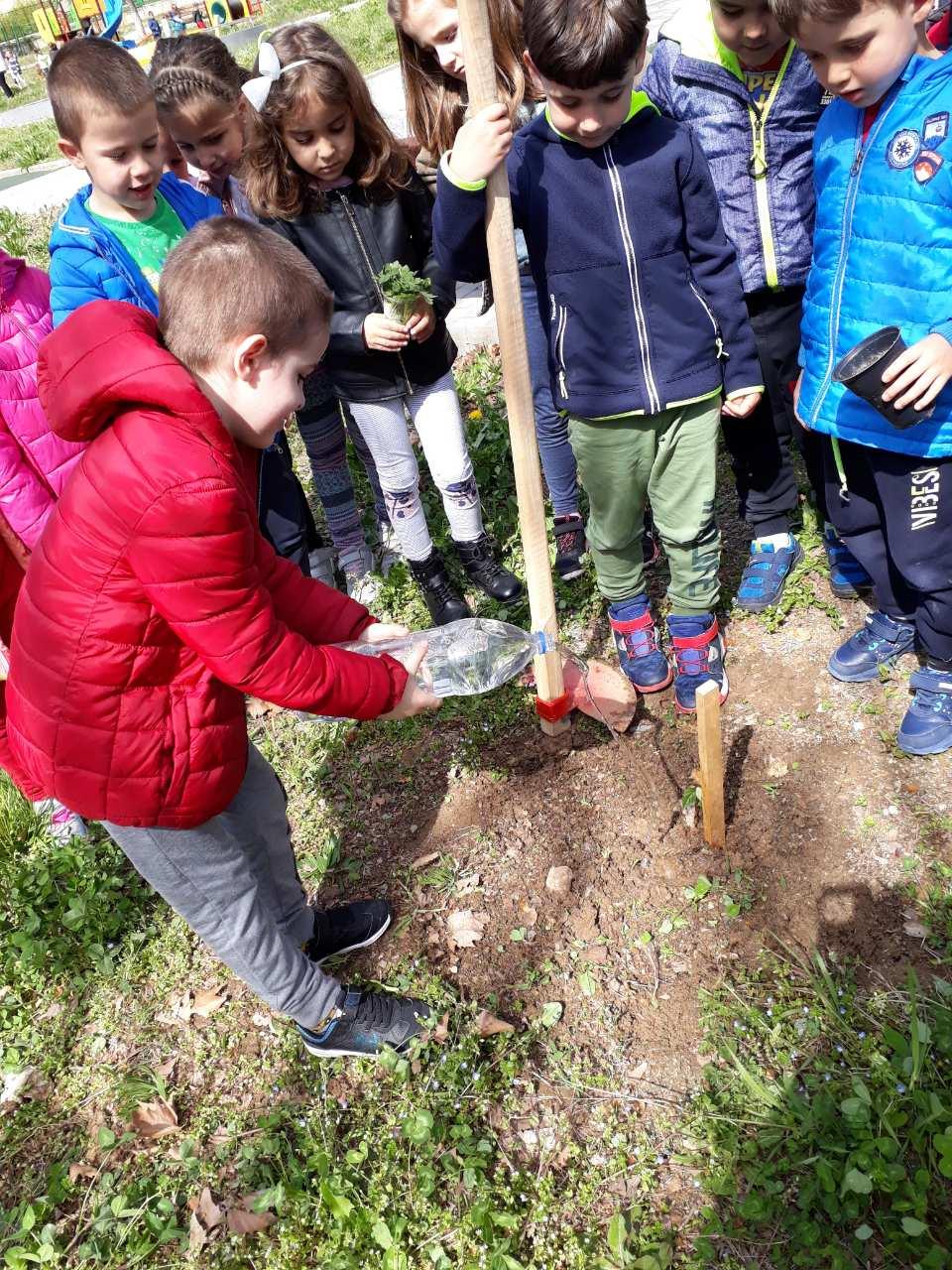 Засаждане на дръвчета по проект на Гората .БГ